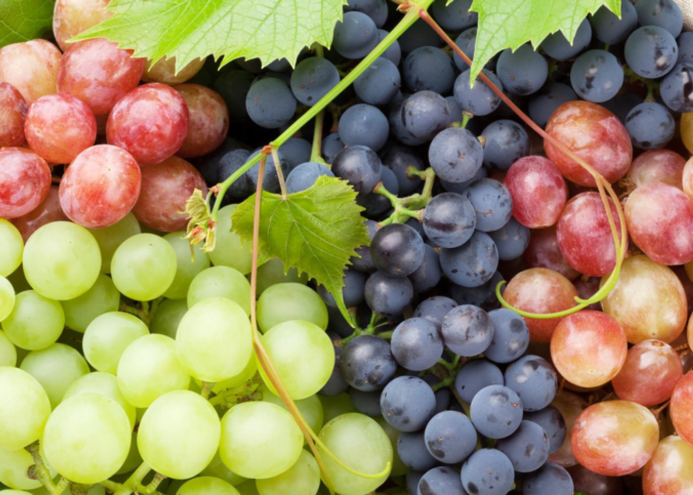 Uva, il frutto che annuncia e addolcisce l'autunno