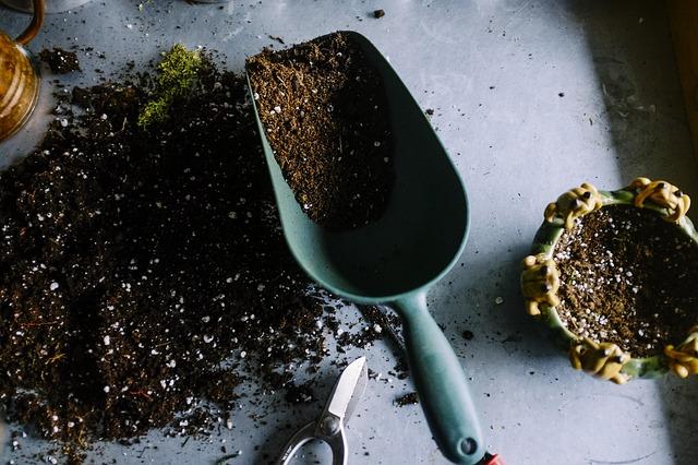 Lavori di giardinaggio: quali sono quelli da fare a settembre?