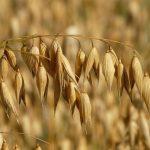 azienda agricola Martuccio Maria foraggi