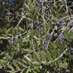 azienda agricola Meola fabio olive