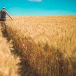 cereali azienda agricola di maria nicolina
