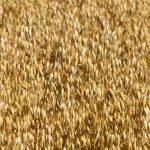 produzione cereali Benevento