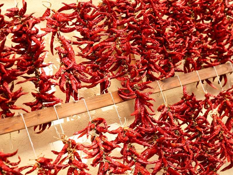 Peperoncino_lasciato_essiccare Peperoncino di Calabria: storia e ricetta dei bucatini con le alici