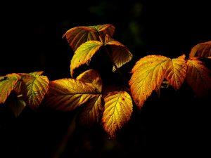 autumn-437769_960_720-300x225 L'agenda di Settembre