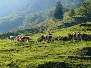 cows-60103_960_720-300x225 L'agenda di Settembre