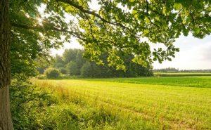 Agricoltura-biologica-e1387192481758-300x185 Agricoltura biologica: una sfida contro la disoccupazione