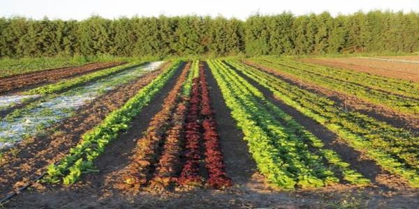 appunti-agricoltura-biologica-amrita-la-via-di-uscita Vero biologico: falsi miti di un settore alimentare in costante crescita