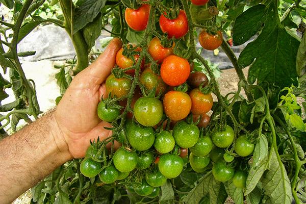 img_archivio410320162152 Vero biologico: falsi miti di un settore alimentare in costante crescita