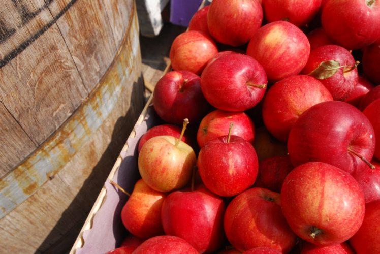 mele-val-di-non-gala-e1507628953216 Val di Non: autunno nella valle delle mele