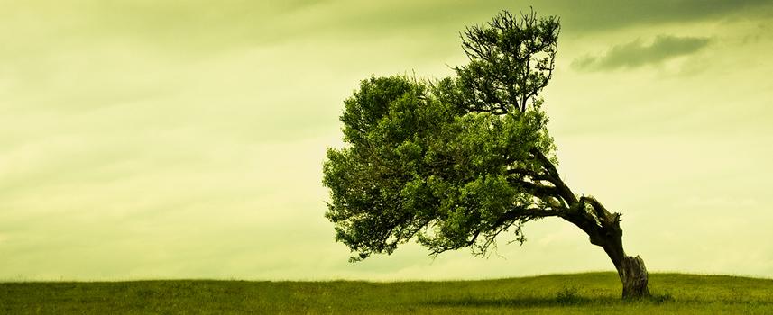 reati_ambientali Ecoreati: contro la morsa dei reati ambientali