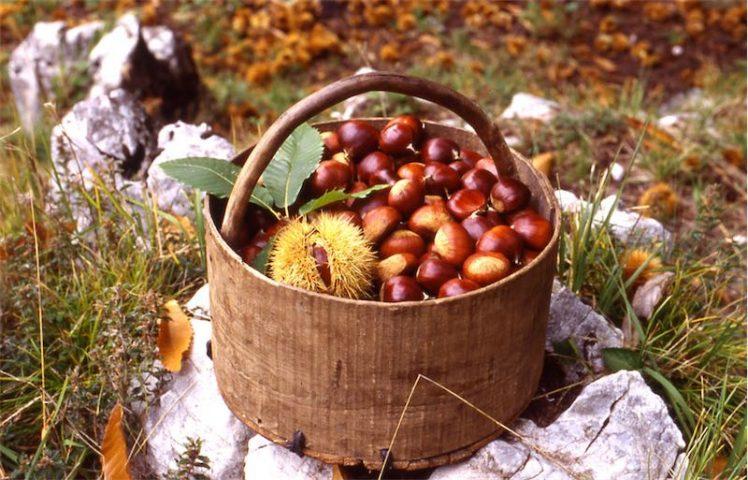 sentieri-per-castagne-tra-Ticino-e-Lombardia-e1507379053321 Castagne: le proprietà del frutto tipico della stagione autunnale