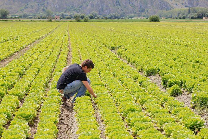 Agricoltura-primo-insediamento-e1510745384784 Agricoltura biologica: una sfida contro la disoccupazione