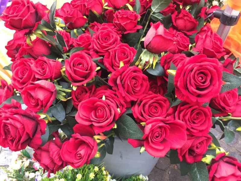 Venaria-Festa-delle-Rose-2016-4 Le rose: da fiori a simbolo del ritorno alla vita