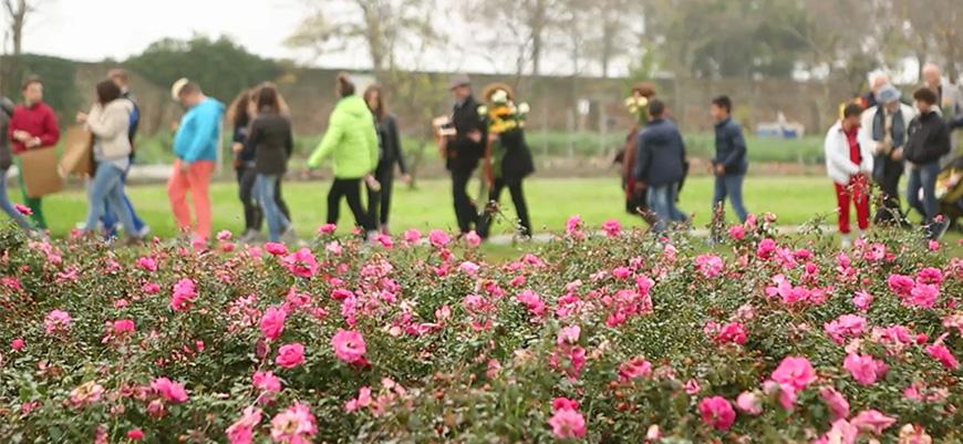 un-giardino-di-rose Le rose: da fiori a simbolo del ritorno alla vita