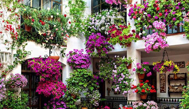 10-fiori-da-balcone-primaverili-come-scegliere-quelli-giusti Consigli utili per curare i fiori da balcone in primavera ed estate