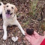 Nikecuore addestramento cane da tartufo
