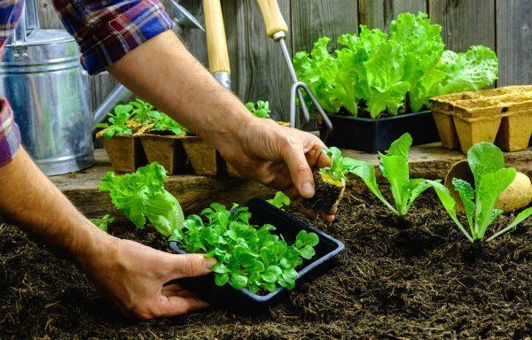 Ortoterapia-Orto-giardino-piante-e1525366802951 Ortoterapia: il verde per sconfiggere le disabilità