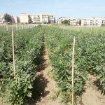 terreni azienda agricola
