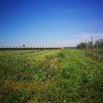 terreni azienda agricola clarabella