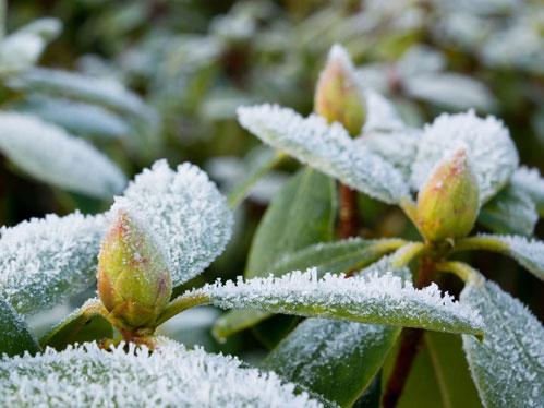 5-piante-da-giardino-che-resistono-al-freddo1.jpg_1041655378 Come proteggere le piante dal freddo