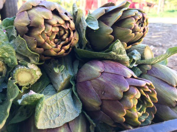 357e8bc4-2e9e-4345-9ce9-e82ed42ca683-e1548080672832 Carciofo Violetto di Sicilia: dolce, delicato e leggermente amarognolo