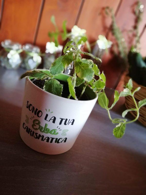 unnamed-3-e1549362773841 Alla scoperta delle erbe aromatiche e delle piante officinali