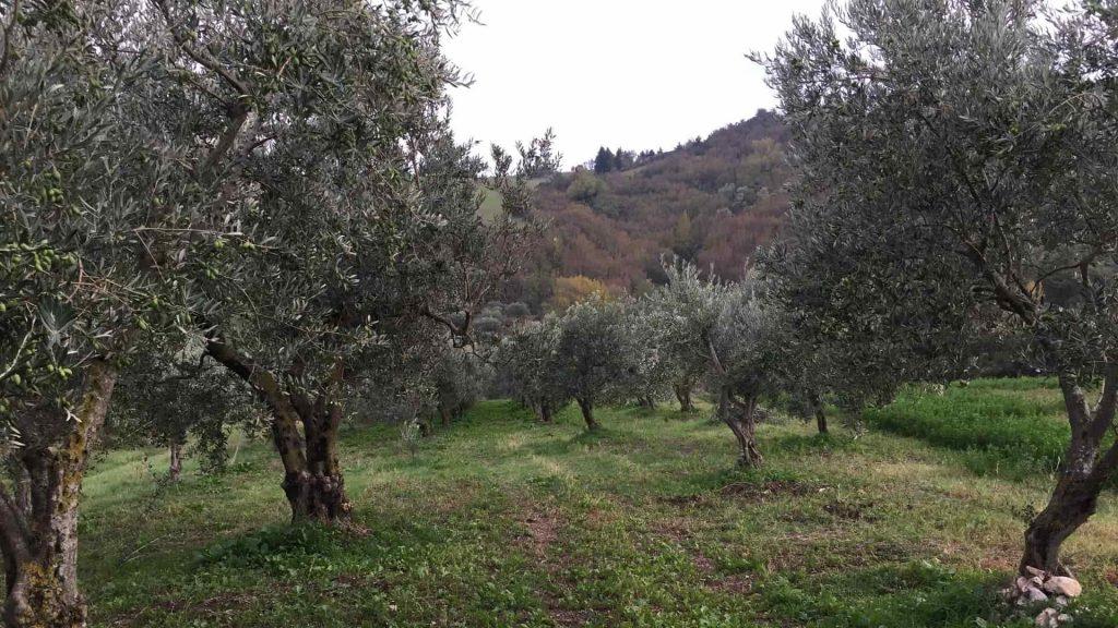 azienda-agricola-calabrese-min-1024x576 Azienda agricola Calabrese Eliseo