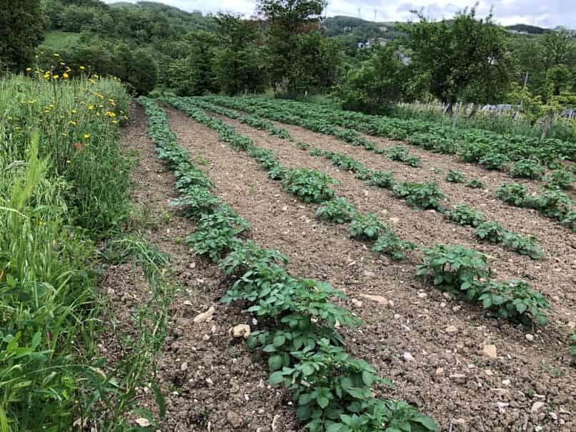 terreno Iapozzuto Elena: produzione cereali, ortaggi e legumi bio